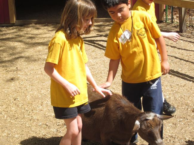 [image] Ms Hymels class 2 students petting goat
